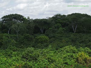 Kaya forest